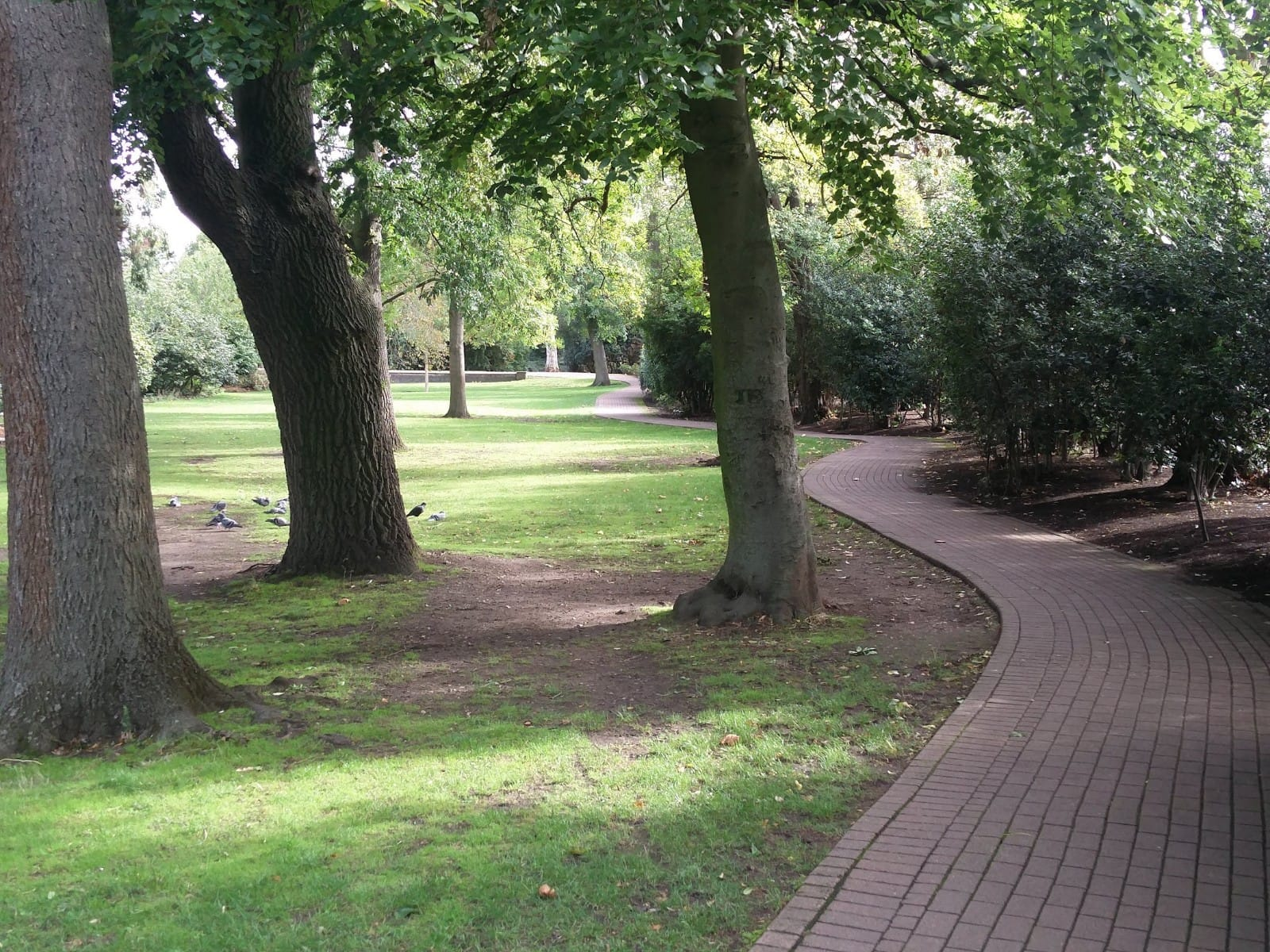Photos of trees at West Ham Park | Stratford | Personal Trainer Tips