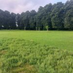 Field   St. James Park   Walthamstow   Personal Trainer