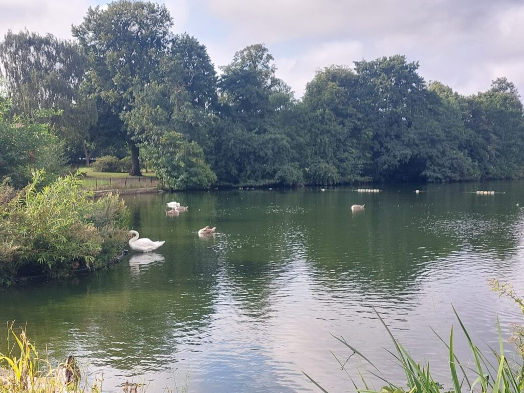 Lake at Valentine's Park | Personal Trainer Tips | DBworkouts.co.uk